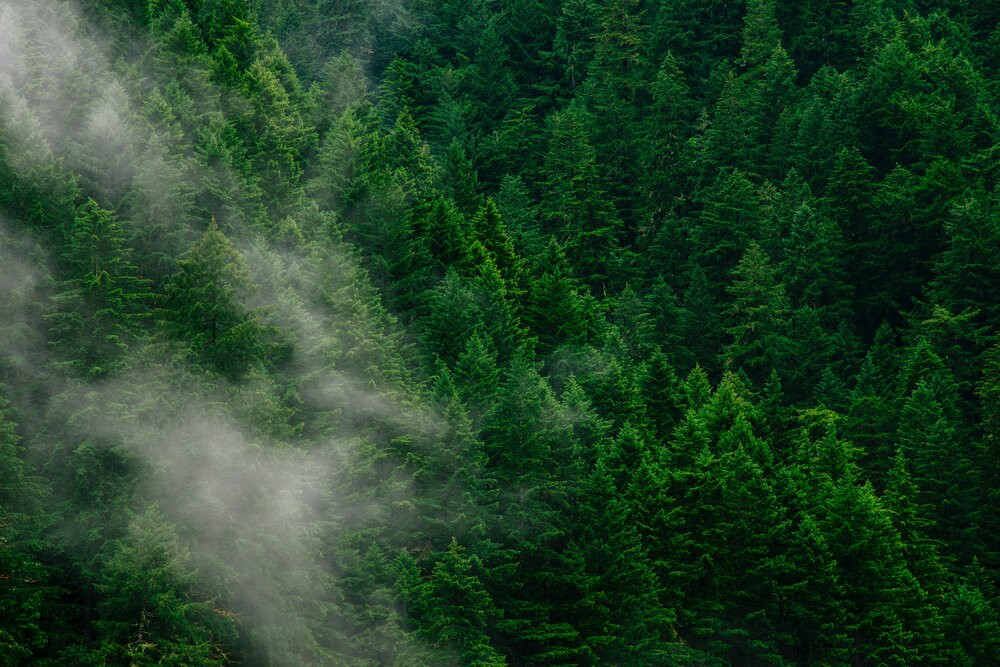 Reforestation Schemes That Are Making The Planet Green Again & How YOU Can Help
